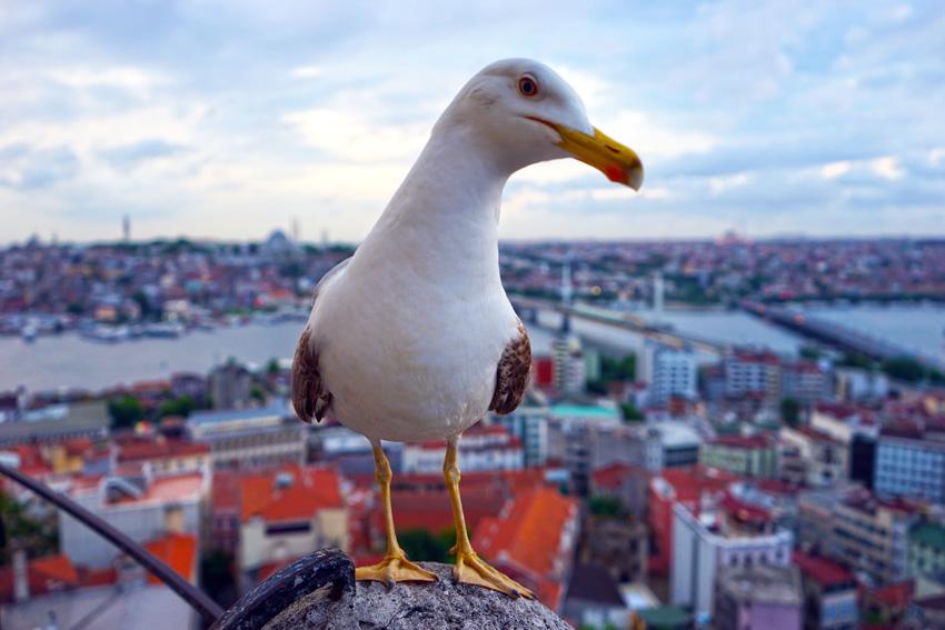 Истанбул през лятото