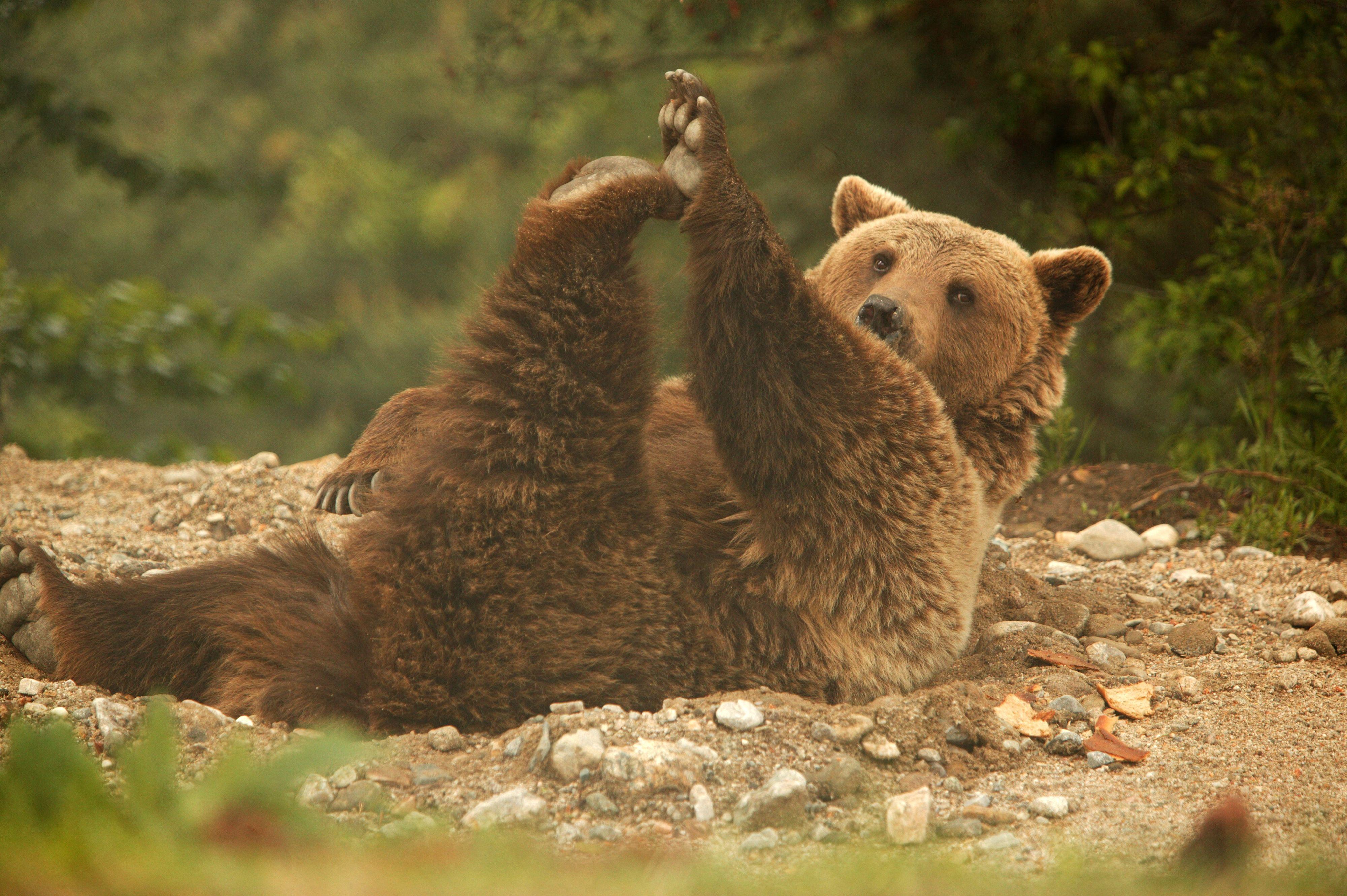 Паркът за танцуващи мечки в Белица